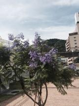 若旦那の日記(熱海で咲くこの花しってます?)